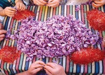 iranian saffron price