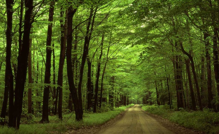 Hyrcanian-Forests, Natural UNESCO World Heritage in Iran